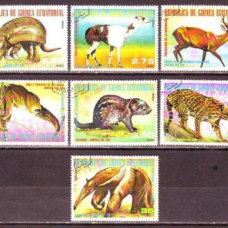Экваториальная Гвинея. Фауна.