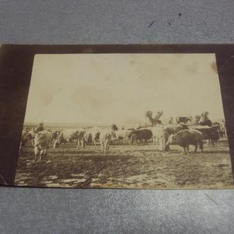 фотография солдаты ра  №1292