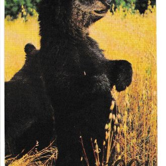 Календарик 1991 Фауна, медведь