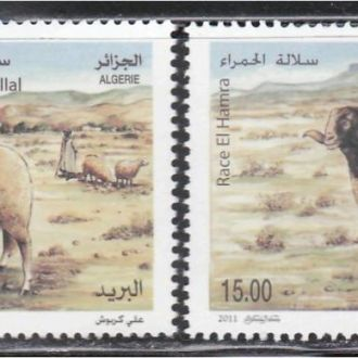 Алжир 2011 ФАУНА ЖИВОТНЫЕ ПОРОДИСТЫЕ ОВЦЫ 2м**