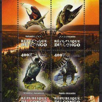 Конго Фауна Птицы Хищники Пернатые Блок