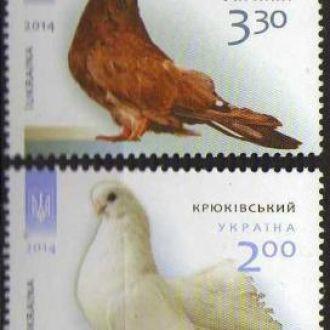 2014 Птахи Голуби Фауна