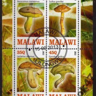 Малави Флора Грибы Растения