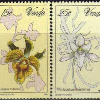 Venda Флора Цветы Растения Чистые Редкие