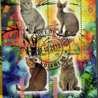Чад Фауна Домашние животные Кошки
