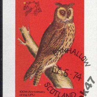 Шотландия Фауна Птицы Пернатые Блок