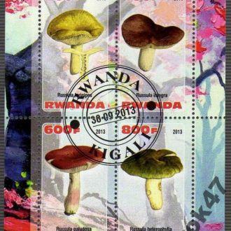 Руанда Флора Растения Грибы