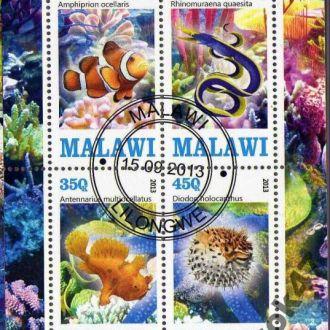 Малави Фауна Морские обитатели Рыбы