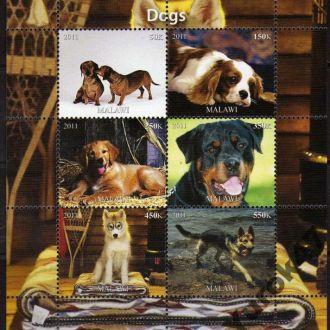 Малави Фауна Домашние животные Собаки