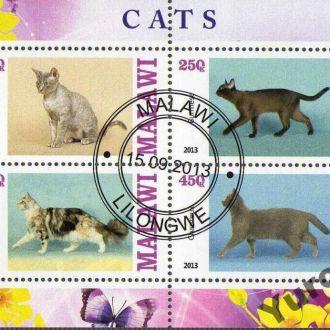 Малави Фауна Домашние животные Кошки