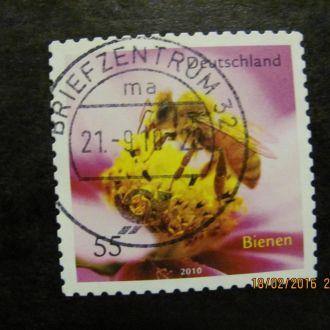 германия пчела 2010 гаш