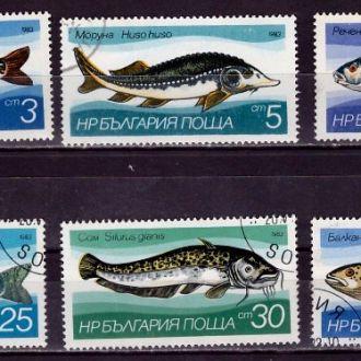 Фауна.Болгария.Рыбы. 6м  53