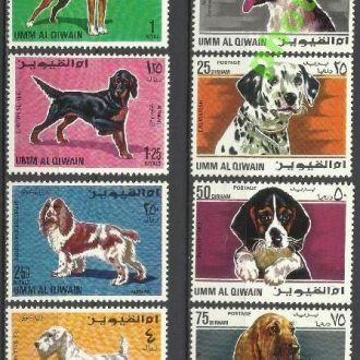 Умм-эль-Кайвайн 1967 фауна собаки 8м.**