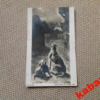 Открытка. Старинная. Собаки. Россия. 1914г.