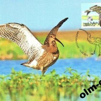 Belarus / Беларусь - КМ Птица года 2011 OLM-OPeN