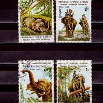Фауна.Лаос Слоны  4м 4