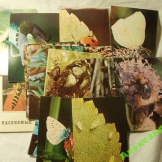 Набор открыток насекомые