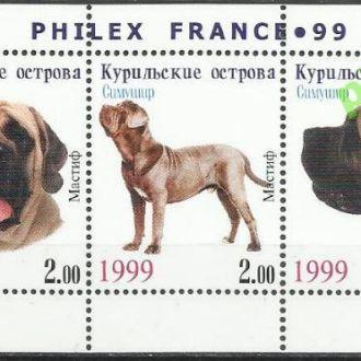 Россия Курильские о-ва Симушир 1999 фауна собаки м