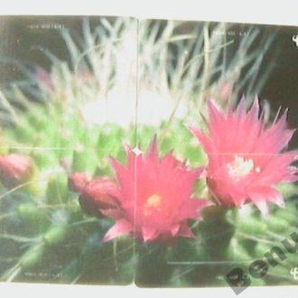 Китай телефонная карточка кактусы (пазл 4 шт.)