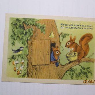 открытка живут две белки высоко 1954 г