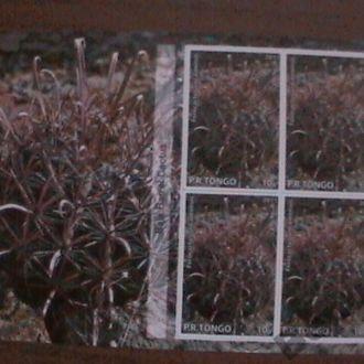 Кактусы суккуленты Тонга сув лист