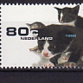 Фауна. Собаки. Нидерланды