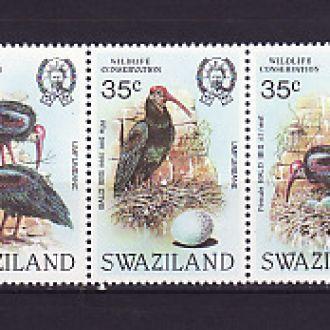 Фауна. Птицы. Свазиленд
