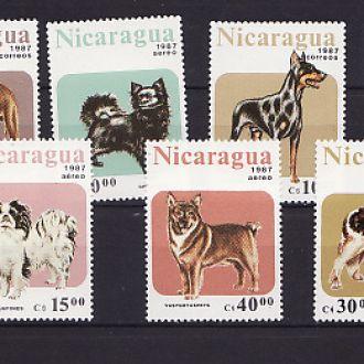 Фауна. Собаки. Никарагуа