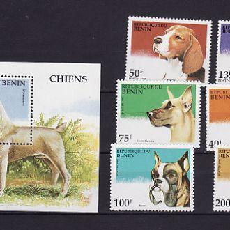 Фауна. Собаки. Бенин