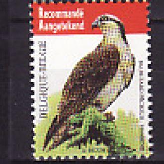 Фауна. Птицы. Бельгия