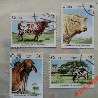 марки-Куба  с 1 гр 1984 год(А1) фауна-коровы
