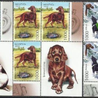 Беларусь 2010 фауна собаки 3х3м.**