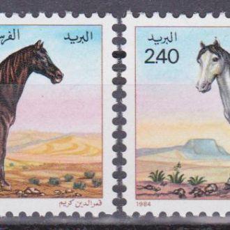 Алжир 1984 ПОРОДИСТЫЕ КОНИ СКАКУНЫ ЖЕРЕБЦЫ ЛОШАДИ ЖИВОТНЫЕ КОНЕВОДСТВО ФАУНА Mi.854-855** MNH