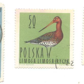 Польша Фауна птицы орел чайка 1964
