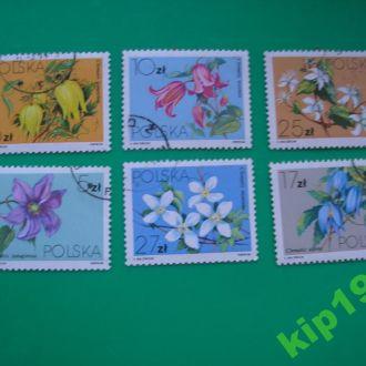 Польша 1984 Цветы