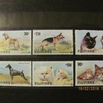 филиппины коты собаки 1979 гаш