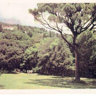 Крым Алупка Парк 50-е годы