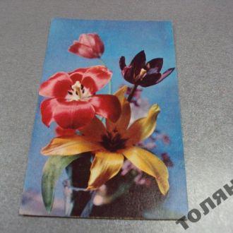 открытка шворак поздравляю 1969