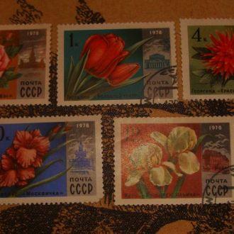 Флора, цветы,  1978, СССР