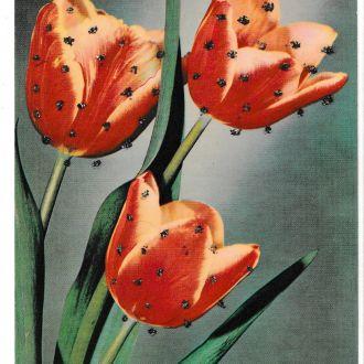 Открытка Германия, цветы, с напылением, 1974 ?