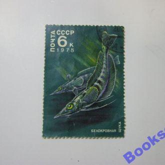 Почтовая марка СССР 1978 г. Белокровная щука.