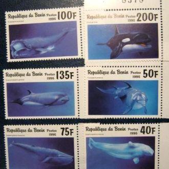 фауна киты море бенин 1996
