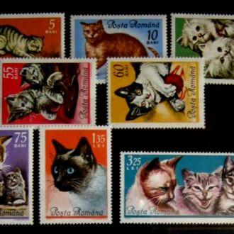фауна кошки румыния сл т
