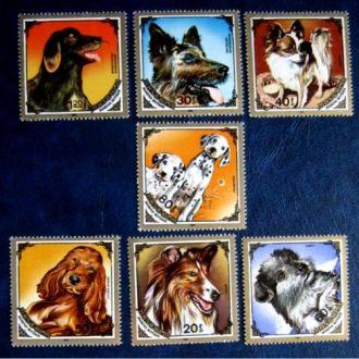 фауна  собаки монголия