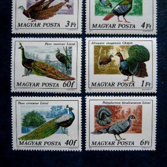 птицы фауна  birds венгрия