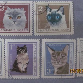 Болгария Кошки 6 шт НИЗЬКИЙ СТАРТ!!!