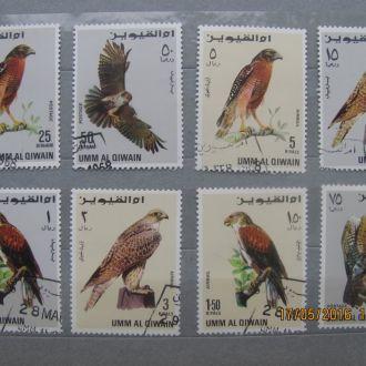 Умм-ель-Кувейн птахи 8 шт