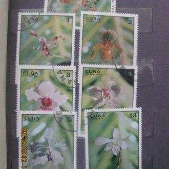 Куба орхідеї