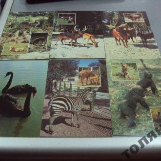 Набор открыток новосибирский зоопарк, выезжающим самолетиком
