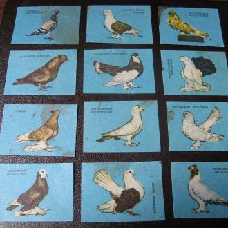 Фауна Голуби Птицы Спичечные этикетки для спичек